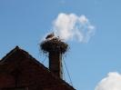 Storche auf Schornstein